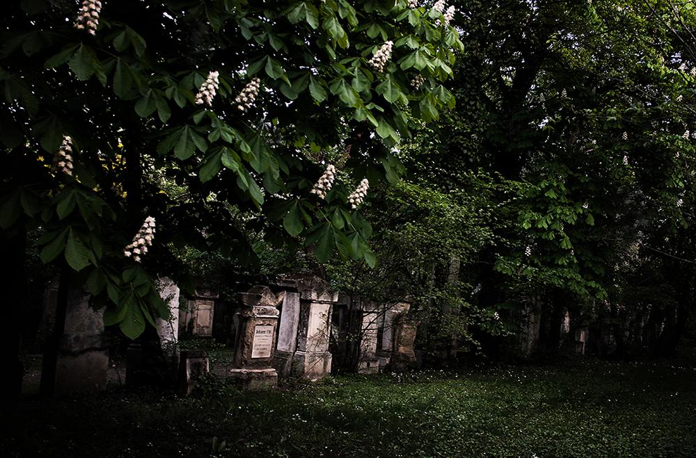 Friedhof St. Marx2 _ c sabine karrer